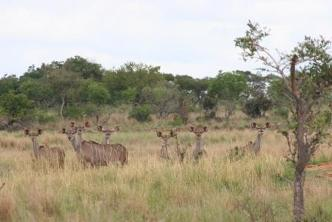 Game viewing in the Waterberg